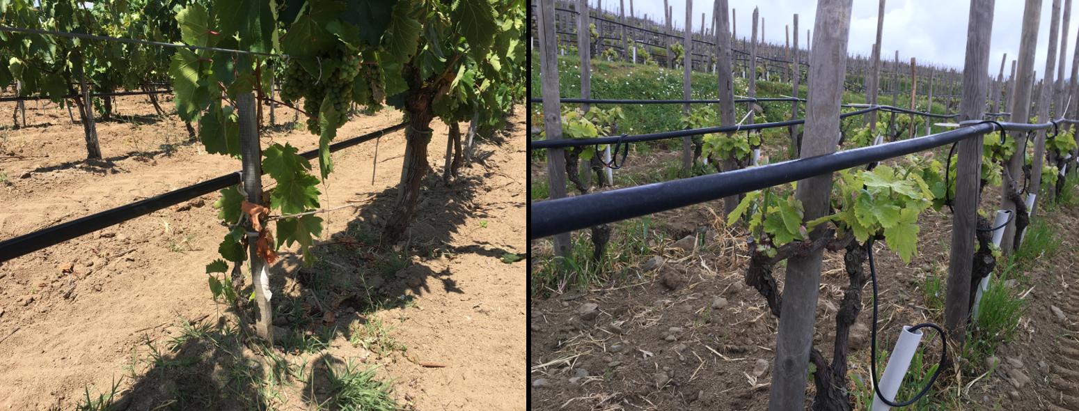 Deux façons d'un système d'irrigation par goutte à goutte aérien