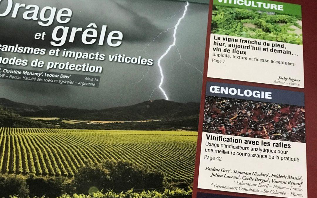 La rafle : une réponse aux challenges actuels de Bordeaux.